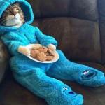 El gato de las galletas