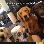 ¿De verdad te lo vas a comer todo todo?