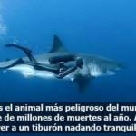 El animal más peligroso del mundo y al lado un tiburón...