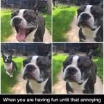 Cuando lo estás pasando bien hasta que llega ese amigo...